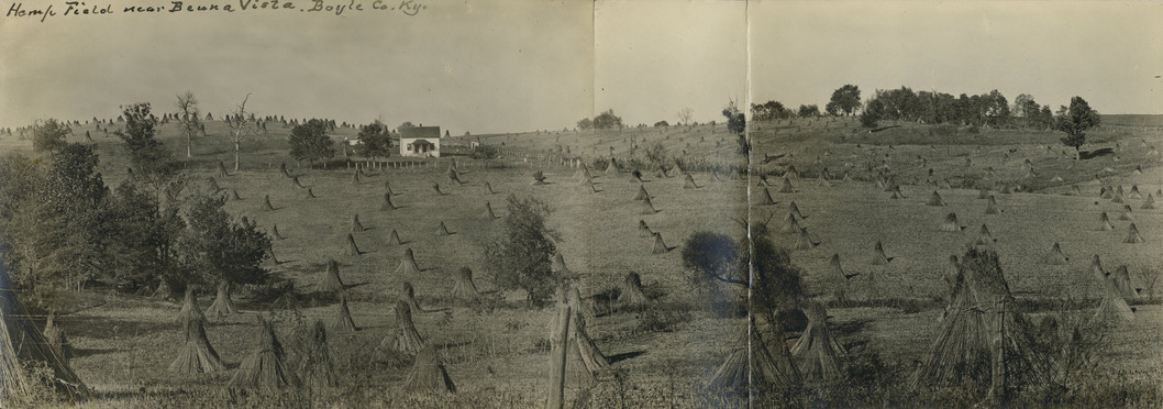Hemp Field near Beuna (Buena) Vista, Boyle County, Kentucky