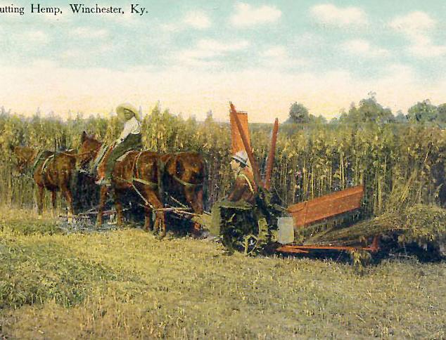 Cutting Hemp in Winchester, Kentucky Postcard Early 1900s