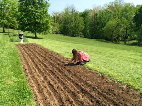 Historic Locust Grove in Louisville plants second hemp plot