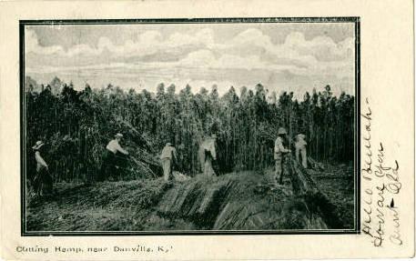Cutting Hemp, near Danville, Ky Circa 1907 Postcard