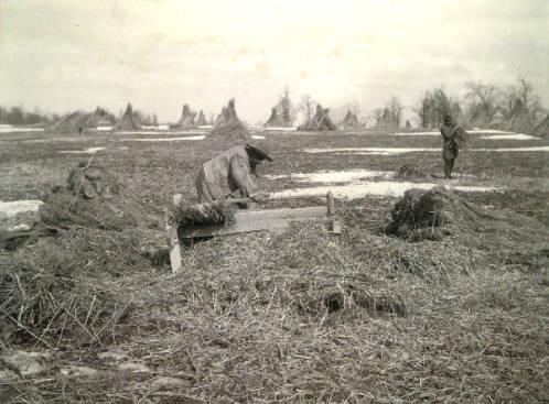 Two Workers in a hemp field in Mercer County, Kentucky