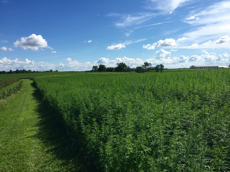 Ag Commissioner Quarles praises legislature's approval of hemp bill