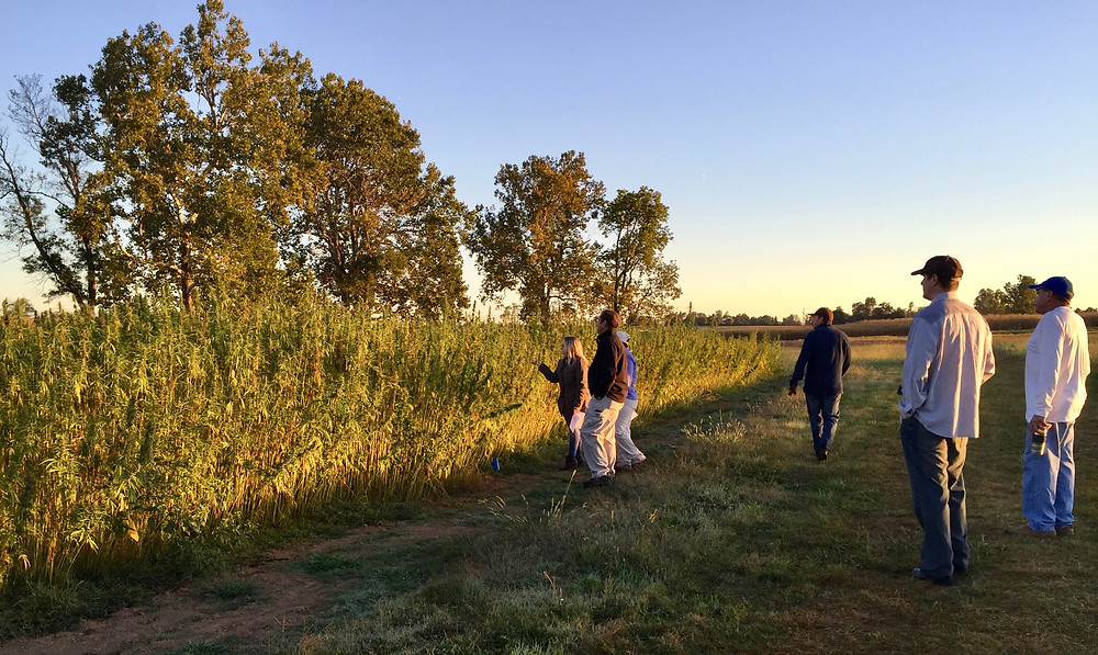 Kentucky Hempsters Co-founder is pictures (far left) inspecting University of Kentucky hemp crop with project team on September 15, 2015. Dr. David Williams is pictured to the far right, and was essential in executing the project that season. - Photo By Kentucky Hempsters