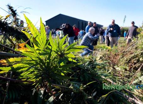 2014 | First Kentucky hemp harvest takes place at University of Kentucky farm in Lexington
