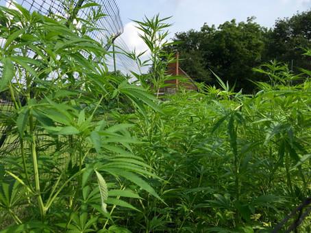 Kentucky Hempsters discuss hemp history at historic locust grove