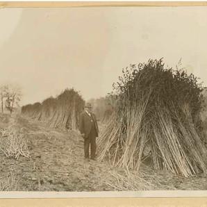 Daivd Gay pictured in hemp fields