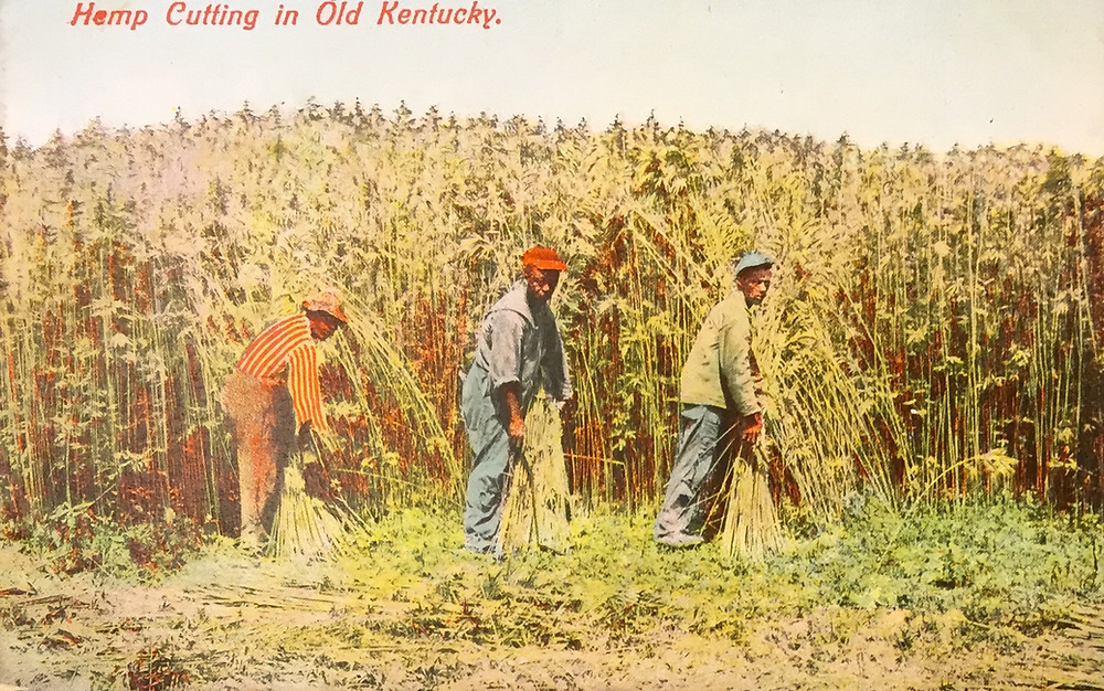 """A postcard from the early 20th century, """"cutting hemp in old Kentucky."""""""
