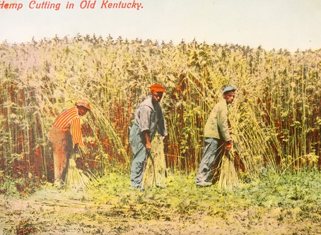 1852 | New hemp varieties come to Kentucky