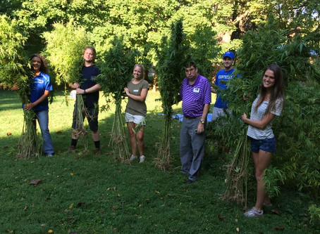 Historic hemp harvest at the Henry Clay Estate in Lexington
