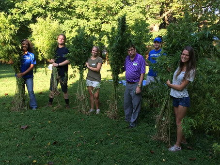 Historic hemp harvest at the Henry Clay Estate in Lexington