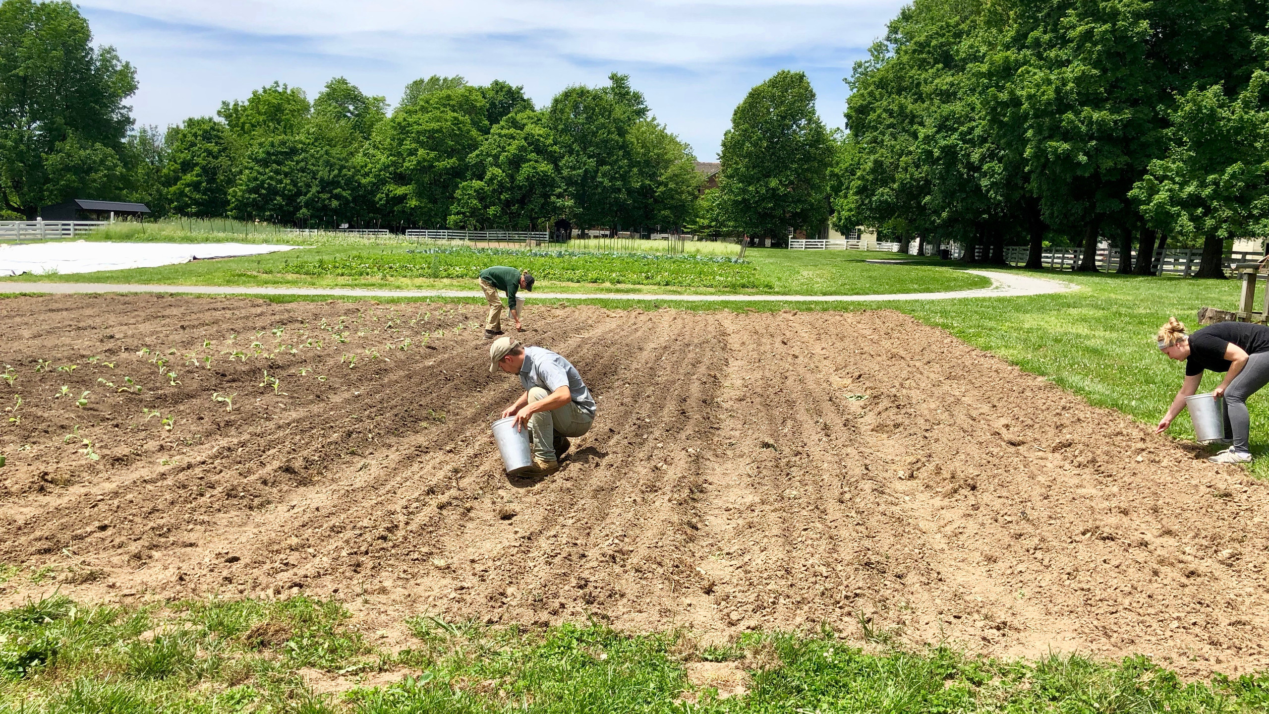 Planting hemp at Shaker Village at Pleasant Hill in Harrodsburg for the first time since the 19th century.