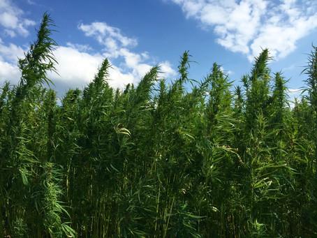 Kentucky Department of Agriculture announces 2017 hemp pilot program participants