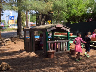 An Urban Preschool Grounded in Nature