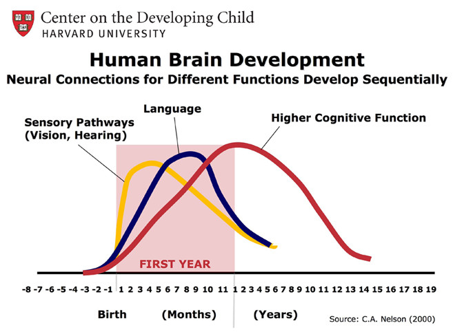 brain-development-large.jpg