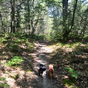 Happy Pups Hike