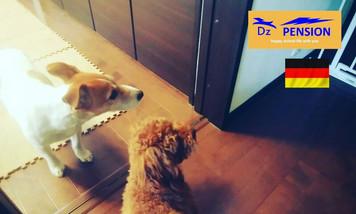 ご宿泊中の犬馴れトレーニング