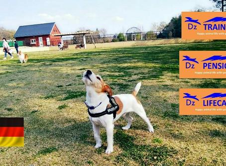 『5つの自由』を満たす、愛犬に優しい動物福祉先進国の環境づくり、ディーズ