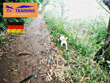愛犬に優しい、動物福祉先進国の環境づくり
