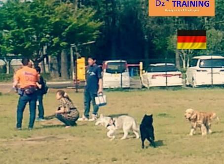 愛犬に優しい、動物福祉先進国のドッグラントレーニング