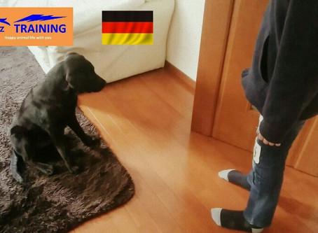 愛犬に優しい動物福祉先進国のトレーニング