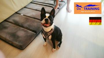 動物福祉先進国ドイツのトレーニングスタート