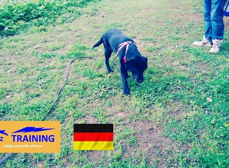 愛犬に優しい、動物福祉先進国の環境トレーニング