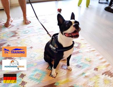 動物福祉先進国を基準としたトレーニングと商品