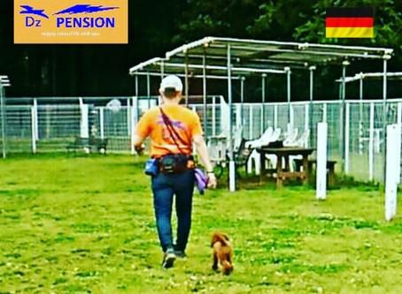 動物福祉先進国ドイツのドッグラントレーニング