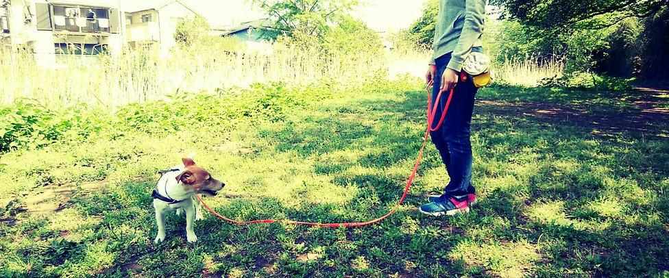 ディーズラーニング、dz learning、千葉, 船橋、犬、ドッグ、ワンコ、hund、dog、世界水準、ドイツ、Germany、動物福祉、先進国、トレーニング、training、ドッグトレーナー、ドッグインストラクター、trainer、instructor、セミナー、アカデミー、学び、ショッピング、商品、製品、フンドワークス、HUNDWERKs ZEUG、ピースワンコ、peace wanko