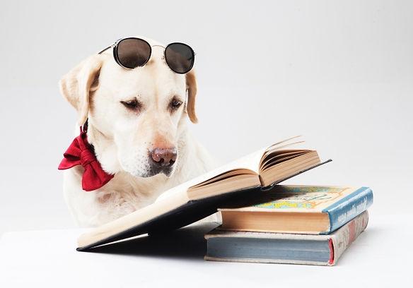 千葉、犬、ドッグ、ワンコ、hund、dog、世界水準、ドイツ、動物先進国、トレーニング、ドッグトレーナー、ドッグインストラクター、dog trainer、dog instractor、宿泊、ホテル、アカデミー、学び、ショッピング、商品、製品、フンドワークス、HUNDWERKs ZEUG