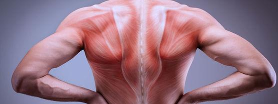 masseur fascias.jpg