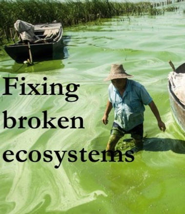 fixing broken ecosystems.jpg
