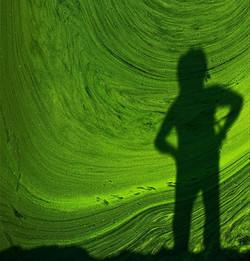 green-algae-india.jpg