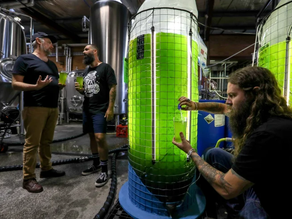 Craft beer and algae? Where my World's collide...