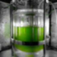 Bioreactor with algae.jpg