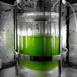 Bioreactor with algae.jpg