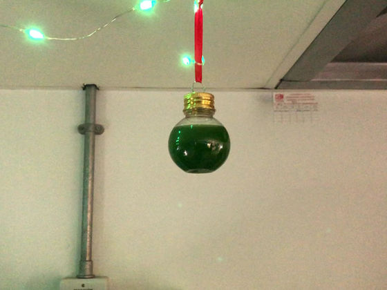 Christmas in the Pandhal Lab
