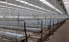 Seedling to salad: Sustainability in UK tomato production
