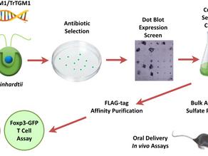 Microalgae as a factory to make therapeutics to target inflammatory bowel disease