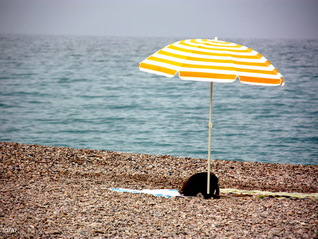 Feeling SAD this summer? You're not alone!