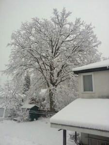 snow oak nov 27