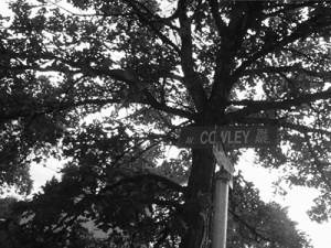b & w cowley bur oak