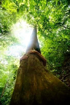 Lr_hug_a_tree