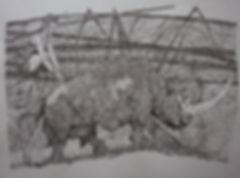 palissade_rhinocéros.jpg
