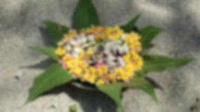 Blumen Indien