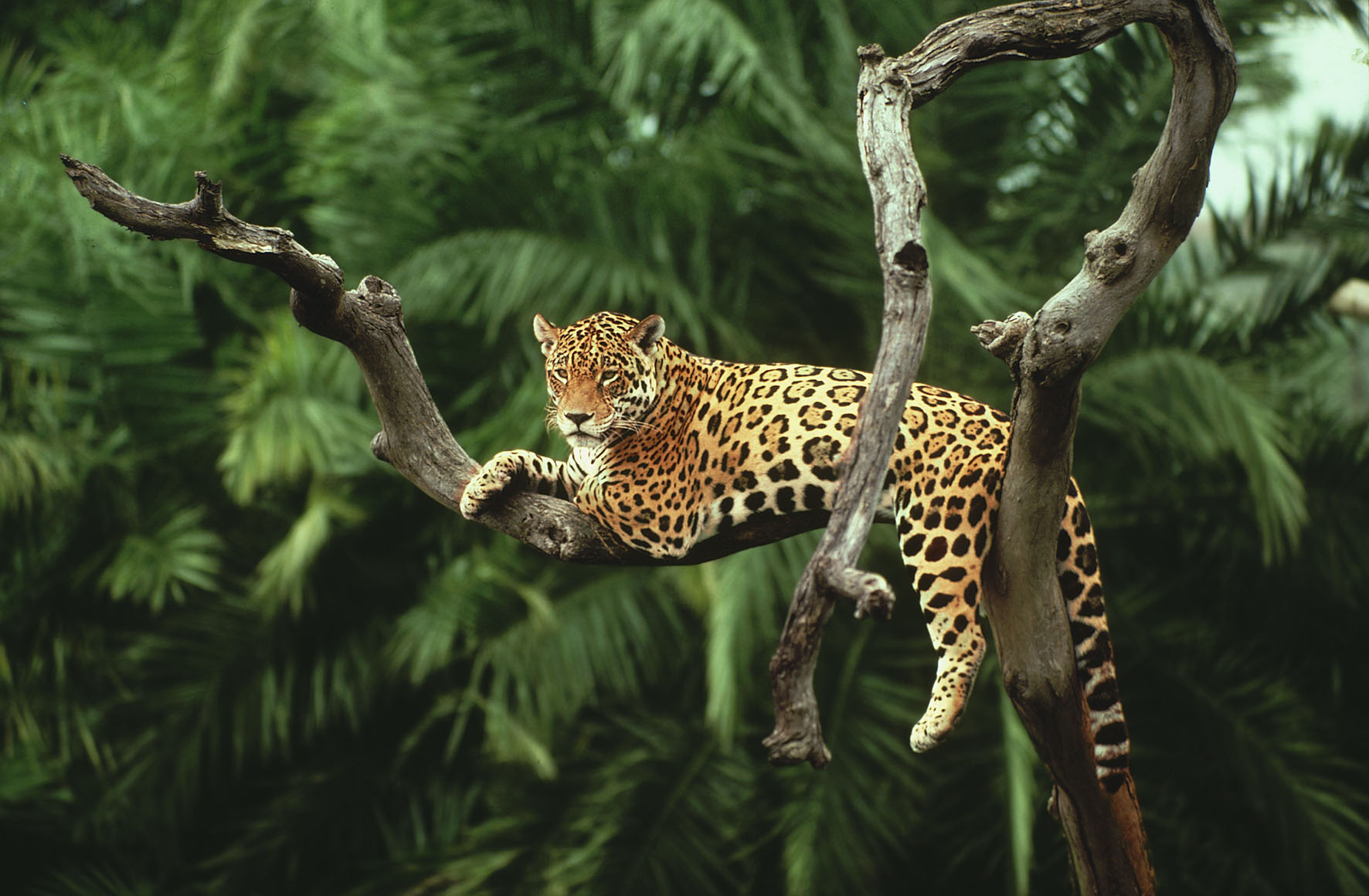 amazon-rainforest-animals-wallpaper-1