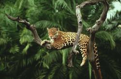amazon-rainforest-animals-wallpaper-1