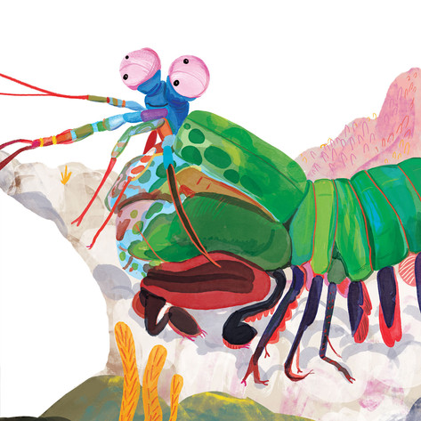 Rainbow Mantis Shrimp