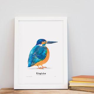 A4 kingfisher.jpg