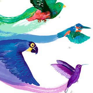 Pride birds web2.jpg